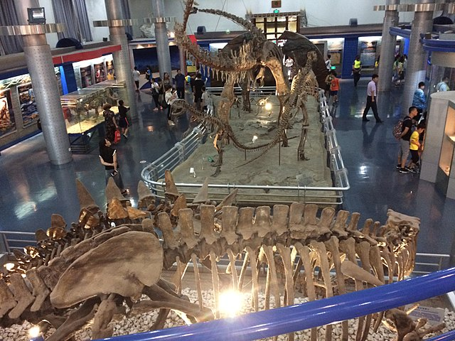 The Mesozoic hall at the Beijing Museum of Natural History.