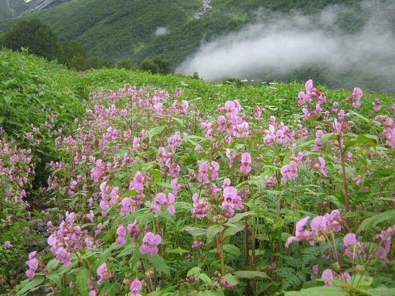 scene from Valley of Flowers